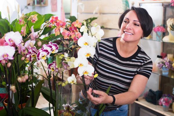 Podar una orquídea: cómo y cuándo hacerlo - Mantenimiento de las orquídeas - cuidados básicos