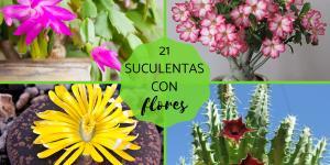 Suculentas con flores: nombres, características y fotos