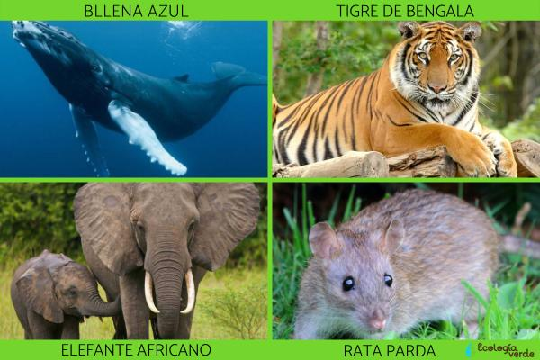 Tipos de mamíferos, sus características y ejemplos - Ejemplos de mamíferos