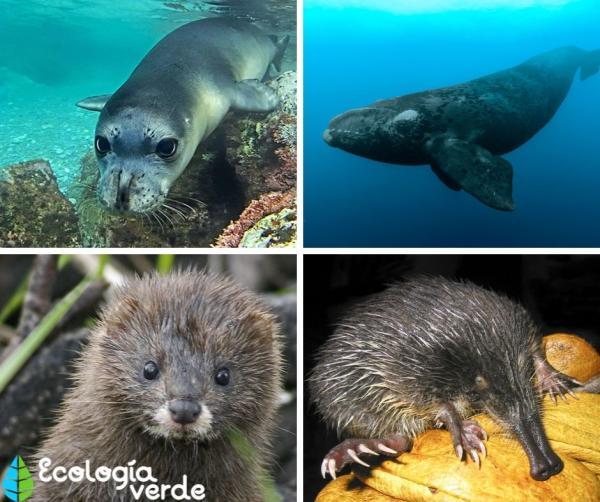32 animales en peligro de extinción en España - Más animales en peligro de extinción en España