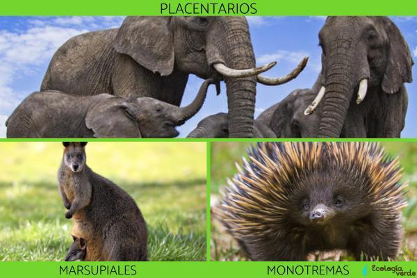 Tipos de mamíferos, sus características y ejemplos - Tipos de mamíferos