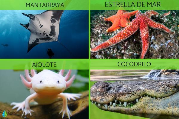 Qué es un ecosistema acuático - Fauna de los ecosistemas acuáticos