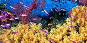 Qué es un ecosistema acuático