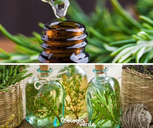 Aceite de romero: para qué sirve y cómo se prepara - Diferencia entre el aceite esencial de romero y el aceite vegetal de romero