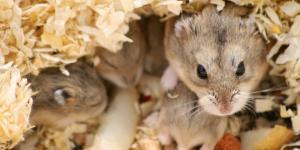 ¿Los animales mamíferos son ovíparos o vivíparos?