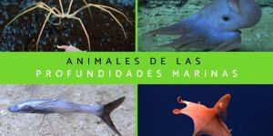 Animales de las profundidades marinas