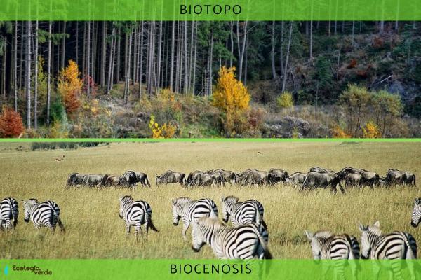 Biotopo y biocenosis: diferencia, relación y ejemplos - Diferencia entre biotopo y biocenosis