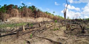 Deforestación en Argentina: causas y consecuencias