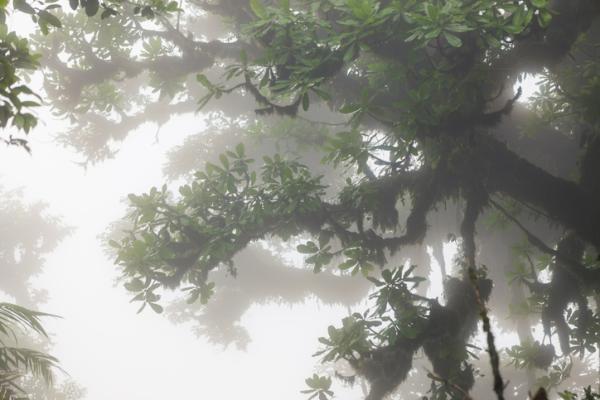 Cuál es la importancia de la humedad atmosférica - Cómo se mide la humedad atmosférica y con qué instrumento