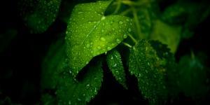 Cuál es la importancia de la humedad atmosférica