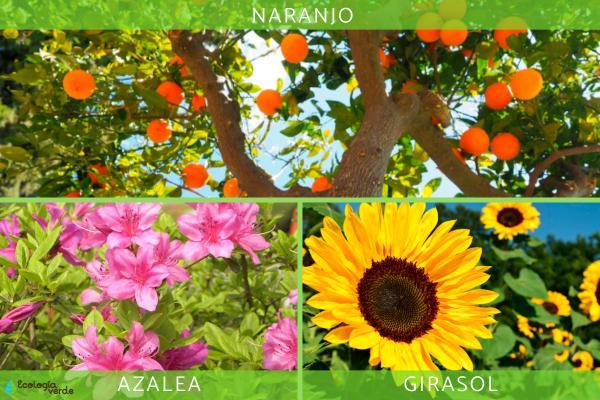 Diferencia entre angiospermas y gimnospermas - Ejemplos de plantas angiospermas