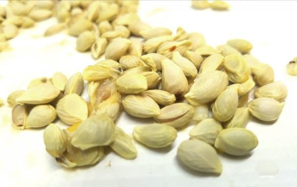 Germinar semillas de limón: cómo hacerlo y cuidados
