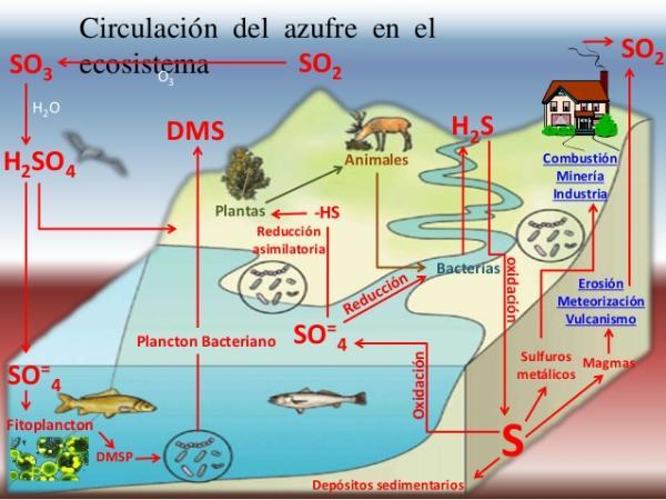Ciclos biogeoquímicos: qué son, tipos e importancia - Ciclo del azufre