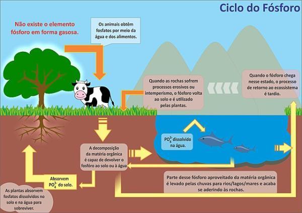 Ciclos biogeoquímicos: qué son, tipos e importancia - Ciclo del fósforo