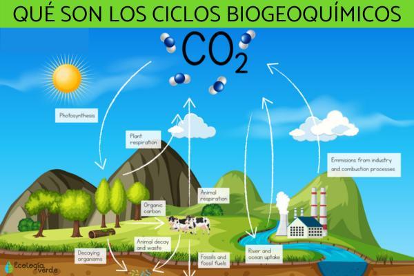 Ciclos biogeoquímicos: qué son, tipos e importancia
