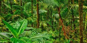 Ecosistema de la selva y sus características