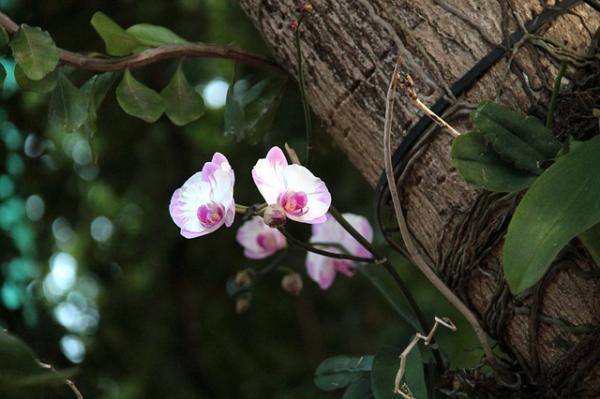 Ecosistema de la selva y sus características - Flora del ecosistema de la selva