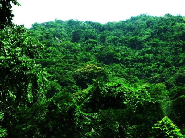 Ecosistema de la selva y sus características - Tipos de selva