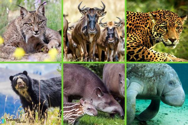 Especies paraguas: qué son y ejemplos - Ejemplos de especies paraguas