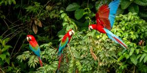 Ecosistema natural: qué es, características y ejemplos