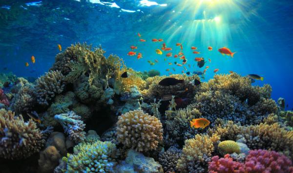 Ecosistema natural: qué es, características y ejemplos - Ejemplos de ecosistemas naturales
