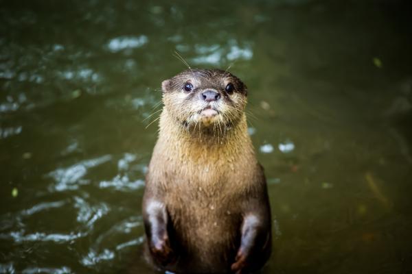¿Se puede tener una nutria como mascota? - Moción 114 presentada para el Congreso Mundial de la Naturaleza (Marsella 2020)