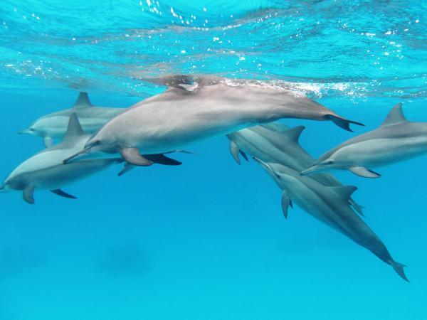 Cuáles son los animales mamíferos marinos - Adaptaciones al medio acuático