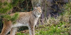 Qué son las áreas de protección de flora y fauna
