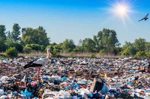Qué es la basuraleza: definición, proyectos y cómo evitarla