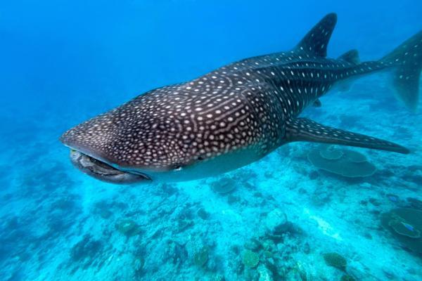 33 peces en peligro de extinción