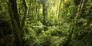 Clima ecuatorial: qué es, características, flora y fauna