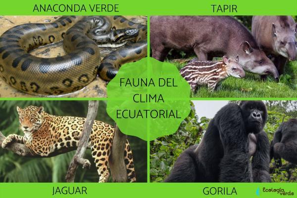 Clima ecuatorial: qué es, características, flora y fauna - Fauna del clima ecuatorial