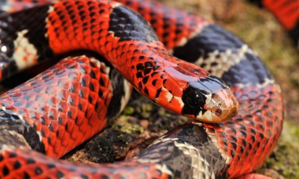 Animales vertebrados sin extremidades: ejemplos
