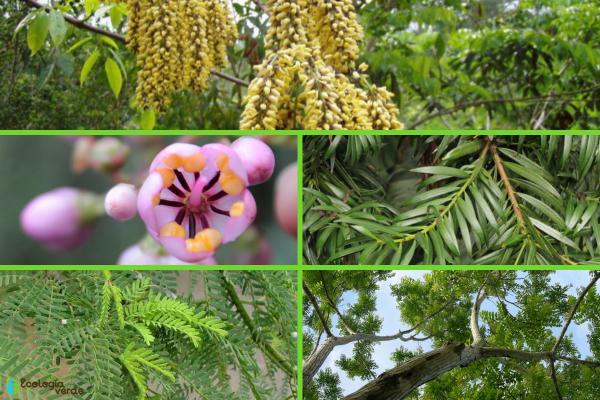 Plantas en peligro de extinción en el Perú - Otras plantas en peligro de extinción en el Perú
