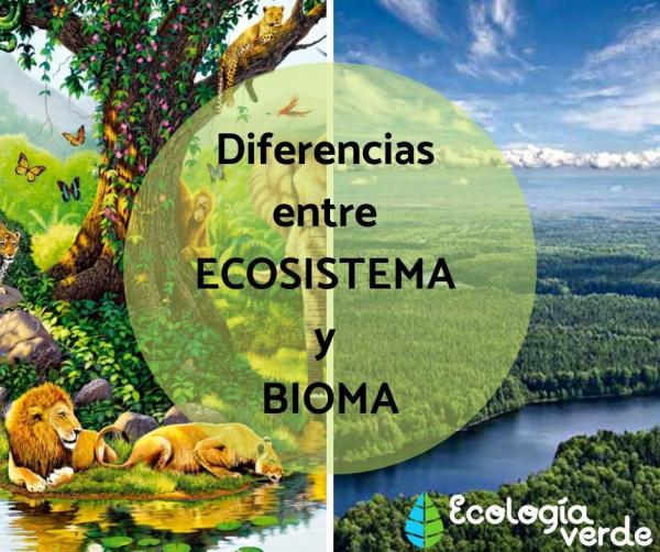 Diferencias entre ecosistema y bioma