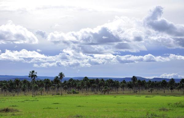 Diferencias entre ecosistema y bioma - Qué es un bioma
