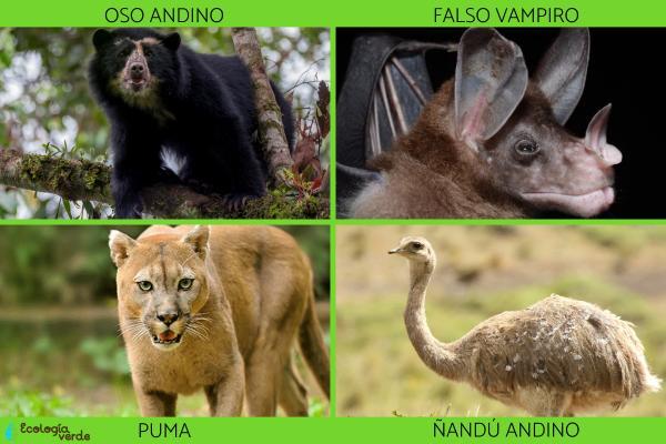 Flora y fauna de Bolivia - Animales en peligro de extinción en Bolivia