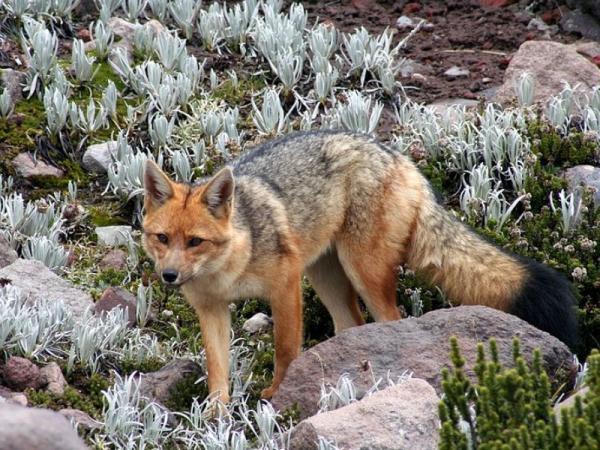 Matorrales: qué son, tipos y fauna - Fauna de los matorrales