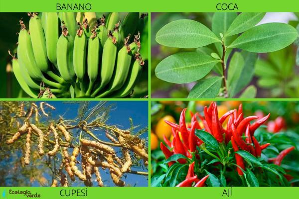 Flora y fauna de Bolivia - Flora de Bolivia