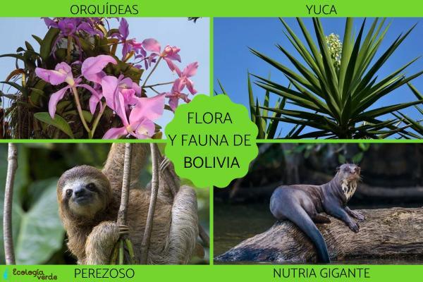 Flora y fauna de Bolivia