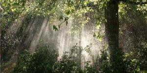 Por qué los árboles atraen la lluvia