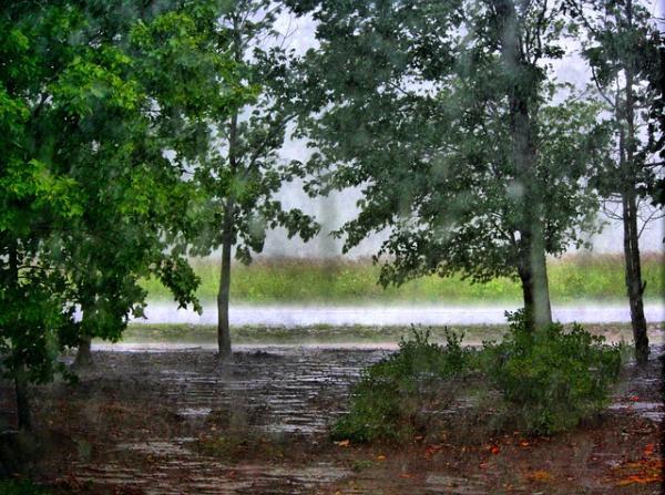 Por qué los árboles atraen la lluvia - Qué importancia tienen los árboles para la formación de lluvia