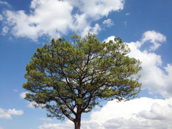 Por qué los árboles atraen la lluvia - Relación entre árboles y formación de nubes