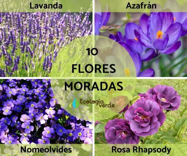 10 flores moradas