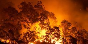 Qué son los incendios forestales y cómo se producen