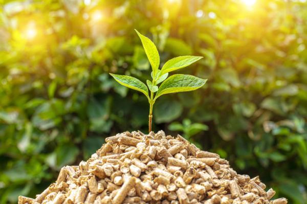 Energía biomasa: ventajas y desventajas - Ventajas de la energía biomasa