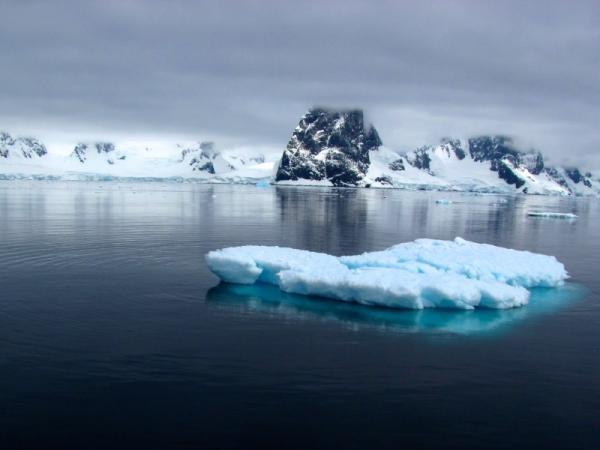 Ecosistema polar: características, fauna y flora - Ecosistema polar: características