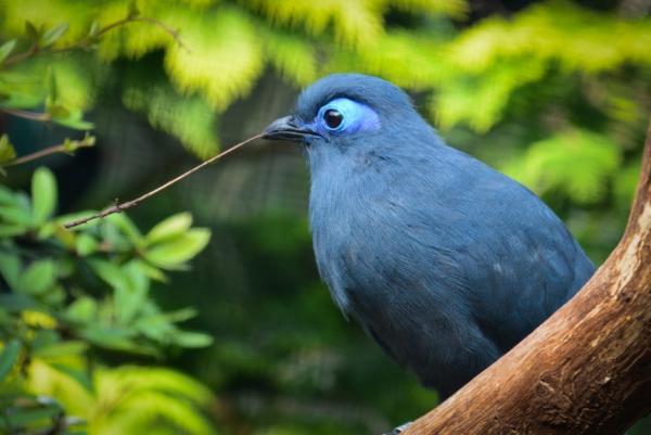 Animales endémicos de Madagascar - Aves endémicas de Madagascar
