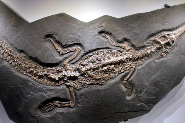 Tipos de fosilización y sus características - Tipos de fosilización según el proceso químico