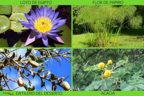 Flora y fauna de Egipto - Flora de Egipto